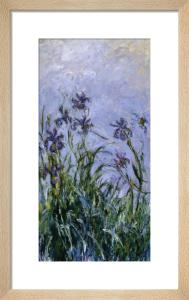 Iris Mauves, 1914 by Claude Monet