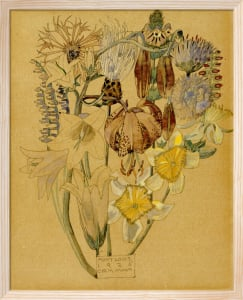 Mont Louis - Flower Study, 1925 by Charles Rennie Mackintosh