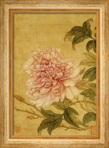 Peony by Yun Shou Ping