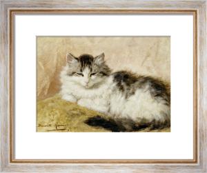 A Cat, 1893 by Henriette Ronner-Knip