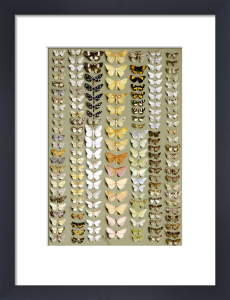 One Hundred And Fifty-Eight Medium And Small-Sized Moths In Seven Columns by Marian Ellis Rowan