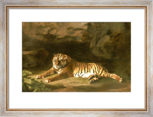 Portrait of the Royal Tiger, c.1770 by George Stubbs