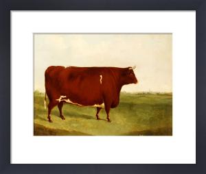 Twin Beast, A Shorthorn, Devon Cross Bull In A Meadow, A Village Beyond by G. Sinclair