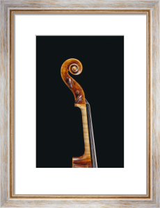 Italian Violin by Giuseppe Guarneri