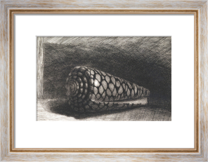 The Shell (Conus Marmoreus), 1650 by Rembrandt