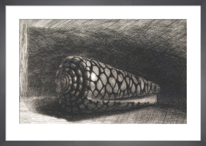 The Shell (Conus Marmoreus), 1650 by Rembrandt van Rijn