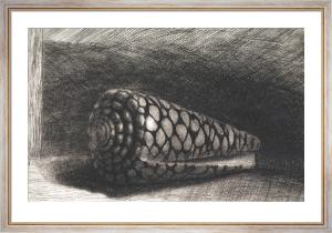 The Shell (Conus Marmoreus), 1650 by Rembrandt van Rijn