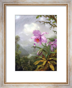 Hummingbird Perched on an Orchid Plant by Martin Johnson Heade
