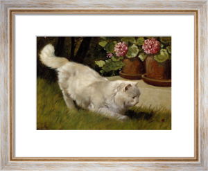 A White Persian Cat With A Ladybird by Arthur Heyer