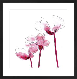 Cyclamen by Louise Cunningham