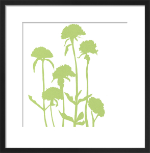 Silhouette Lychnis by Louise Cunningham