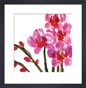 Orchids by Louise Cunningham