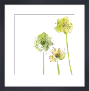 Allium by Louise Cunningham