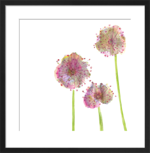 Lilac Allium by Louise Cunningham