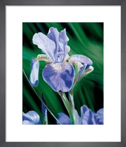 Iris by James Knowles