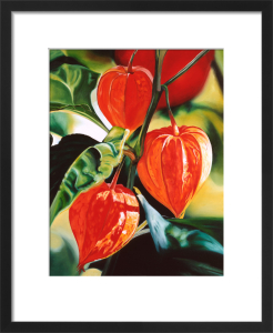 Chinese Lanterns by James Knowles