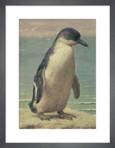 Study of a Penguin by Henry Stacy-Marks