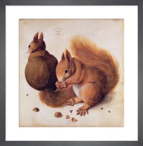 Squirrels, 1512 by Albrecht Dürer