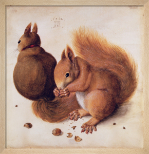 Squirrels, 1512 by Albrecht Dürer