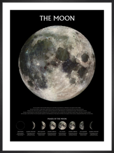 The Moon (Phases) by Anonymous