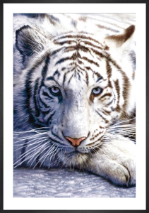 White Tiger by Anonymous