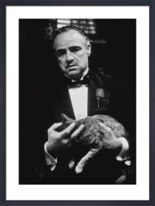 The Godfather (Cat B&W) by Celebrity Image