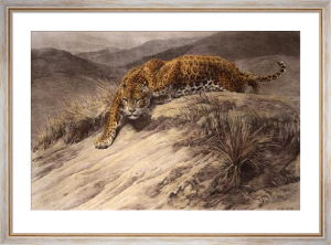 Stealth (Leopard) (Restrike Etching) by Herbert Thomas Dicksee