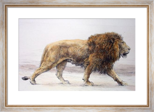 Lion Stalking (Onward) (Restrike Etching) by Herbert Thomas Dicksee