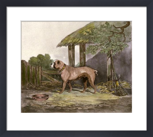 Lucy (Bulldog) (Restrike Etching) by Smith