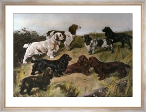 Field Spaniels of the 20th Century (Restrike Etching) by Arthur Wardle