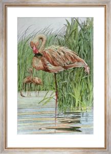 Flamingo (Restrike Etching) by Joanna Willard