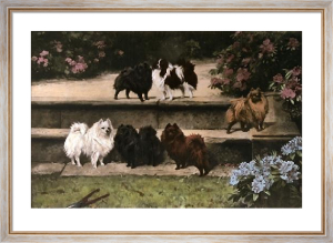 Pomeranians (Restrike Etching) by Arthur Wardle
