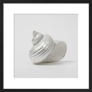 Pearl Sea Shell II by Assaf Frank