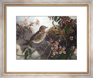 Thrush With Young (Restrike Etching) by Winifred Austen