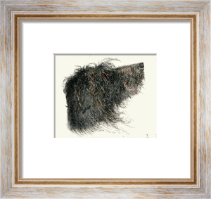 Deerhound Head (Restrike Etching) by Harber