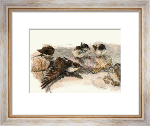 House Sparrows (Restrike Etching) by Winifred Austen