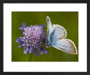 Butterfly on a Flower by Assaf Frank