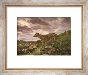 Lurcher (Restrike Etching) by Philip Reinagle