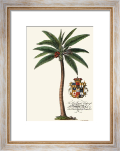 Male Palm Tree (Restrike Etching) by Georg Dionysus Ehret