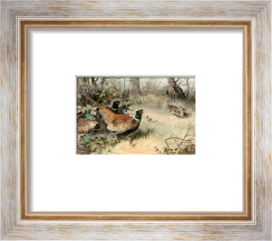 Pheasant (Restrike Etching) by Archibald Thorburn