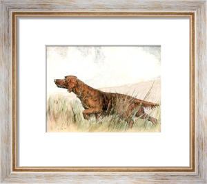 Irish Setter (Restrike Etching) by Ward Binks