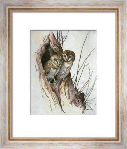 Barn Owls (Restrike Etching) by Winifred Austen