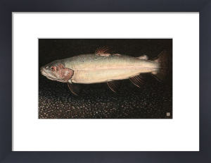 Brown Trout (Restrike Etching) by Alex Mackay