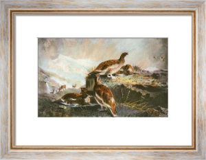 Grouse (Restrike Etching) by Archibald Thorburn