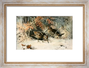 Woodcock (Restrike Etching) by Archibald Thorburn