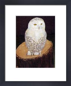 Snowy Owl (Restrike Etching) by Alex Mackay