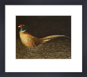 Common Pheasant (Restrike Etching) by Alex Mackay