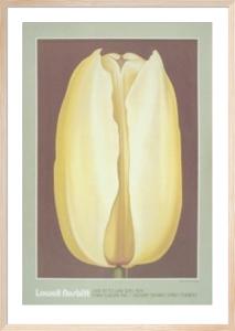 Yellow Tulip by Lowell Nesbitt