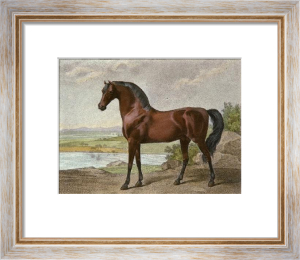 Warren Hasting's Arabian (Restrike Etching) by George Stubbs