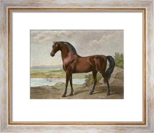 Warren Hasting's Arabian (Restrike Etching) by George Stubbs